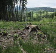 les pařez holina - IMG_7138