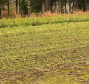 lesní školka pěstební činnost - IMG_3381