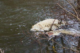 znečištění toku - IMG_3454