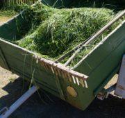 kompost - IMG_6264
