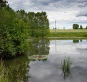 rybník - krajina - IMG_2722