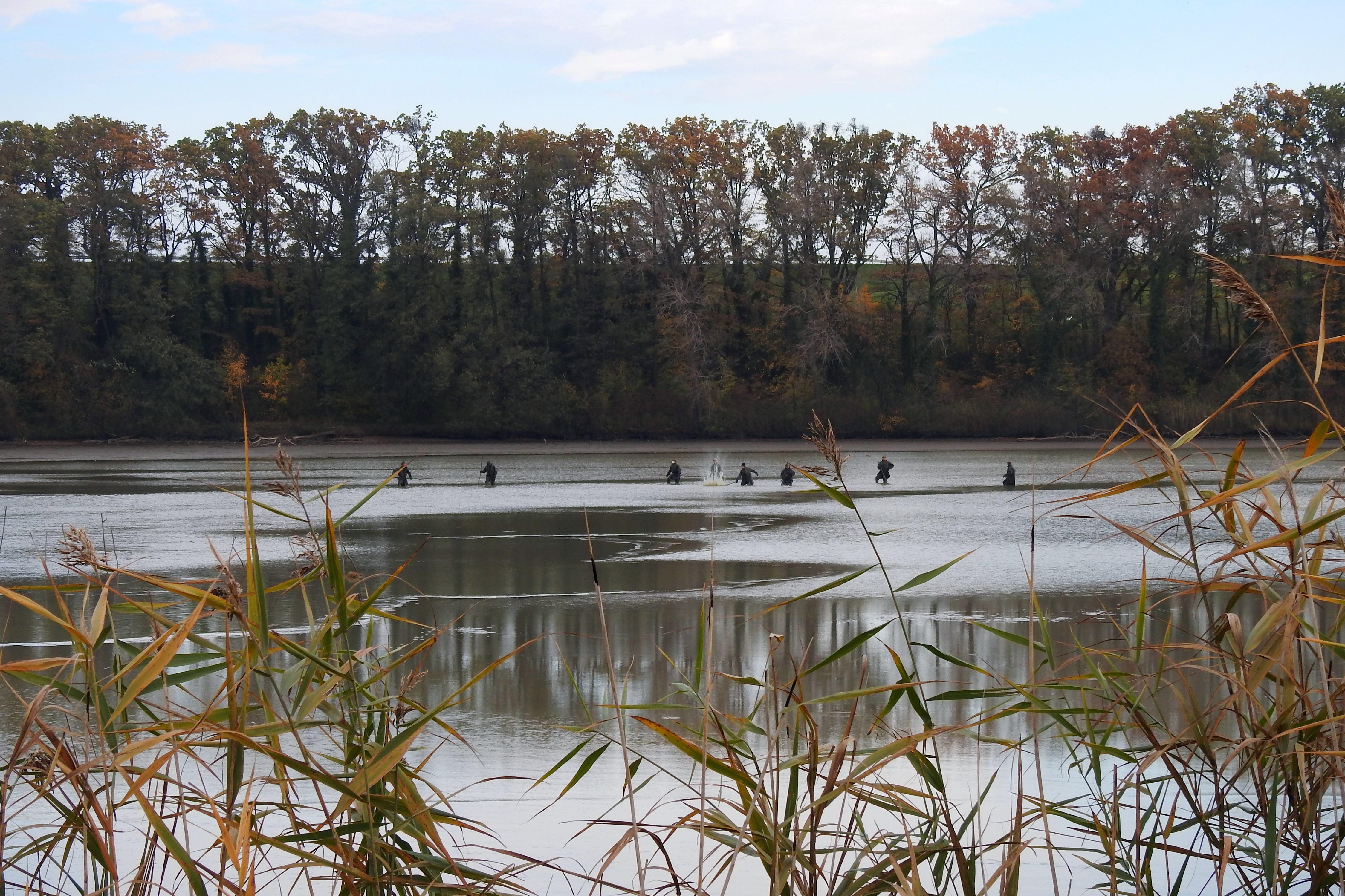 Výlov rybníku Broumar v Opočně